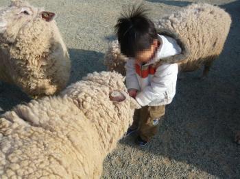 12 やっぱり羊さん.jpg