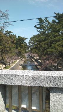 2010.03.27 夙川桜1