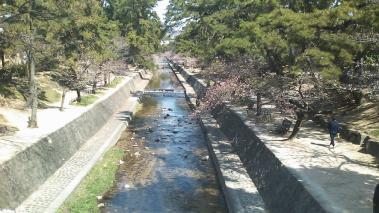2010.03.27 夙川桜2