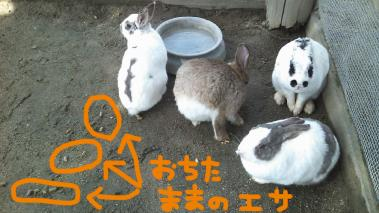 06 うさぎとの触れ合い.jpg