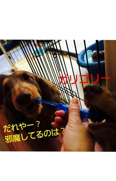 20140124_052947.jpg