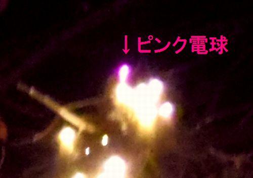 2013仙台ページェント20ピンク電球