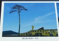 陸前高田18震災後の一本松