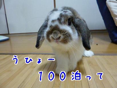 P1000042_convert_20121001205128.jpg