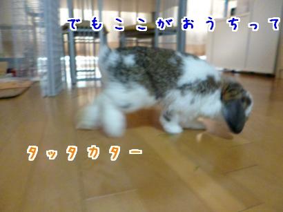 P1000051_convert_20121001205057.jpg