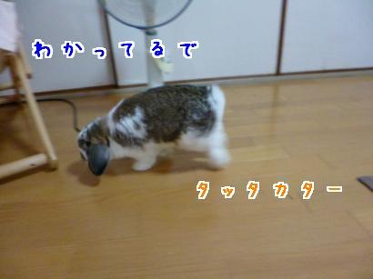 P1000055_convert_20121001205155.jpg