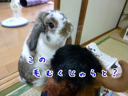 P1000531_convert_20120826083556.jpg