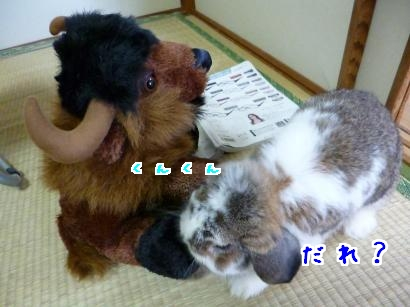 P1000533_convert_20120826083929.jpg