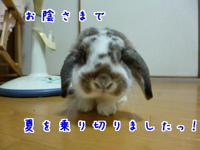 P1000538_convert_20120828191908.jpg