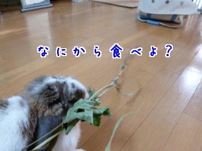 P1000618_convert_20120915080945.jpg