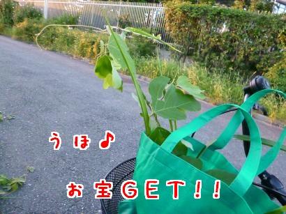 P1000866_convert_20120926195409.jpg