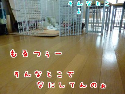 P1000992_convert_20121014143749.jpg