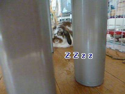 P1000994_convert_20121014143829.jpg