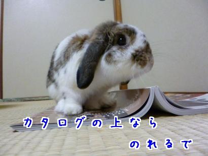 P1010023_convert_20121023190129.jpg