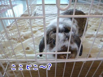 P1010410_convert_20121220193428.jpg