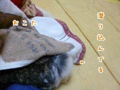 P1010552_convert_20121228070929.jpg