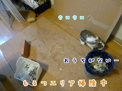 P1010590_convert_20121230184401.jpg