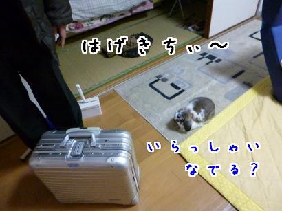 P1010629_convert_20130203093919.jpg