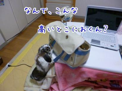 P1010937_convert_20130312212318.jpg