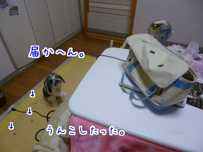 P1010939_convert_20130312212409.jpg