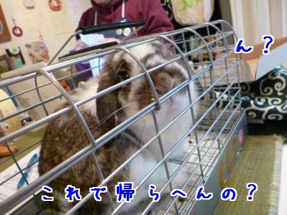 P1010964_convert_20130313214226.jpg