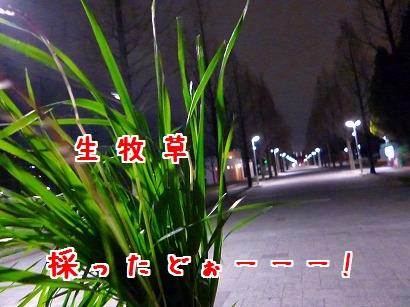 P1020131.jpg