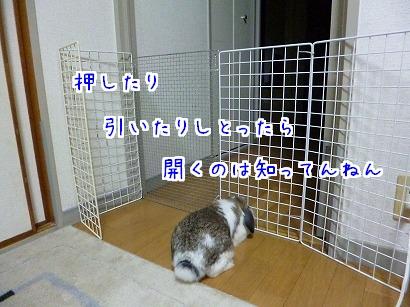 P1020956.jpg