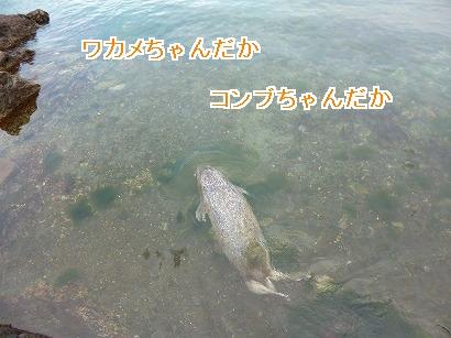 P1030515.jpg