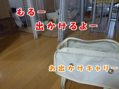 P1110044_convert_20120418063829.jpg