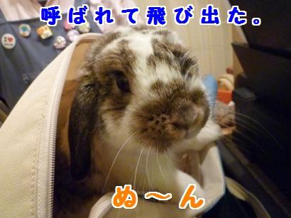 P1110061_convert_20120420212456.jpg