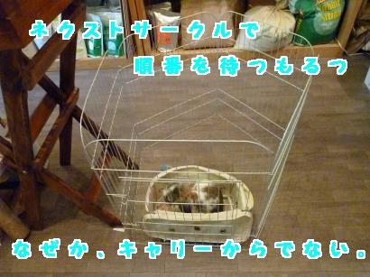 P1120116_convert_20120728211803.jpg