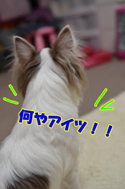 DSC_6016.jpg