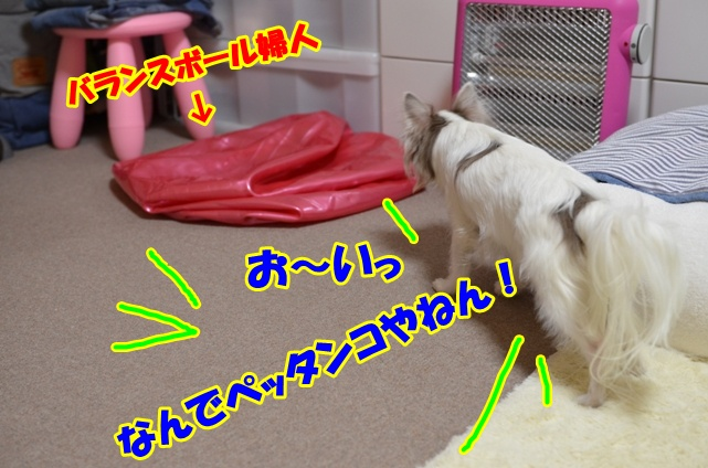 DSC_6018.jpg