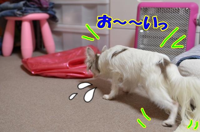 DSC_6019.jpg