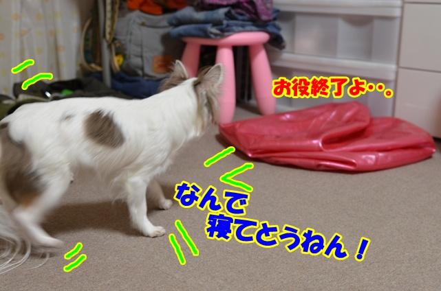 DSC_6021.jpg