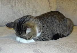 Mあやまる猫1