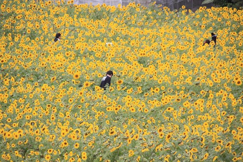 2010_01_30_999_11.jpg