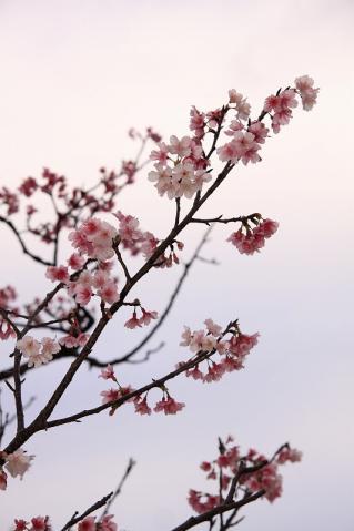 2010_02_11_999_12.jpg