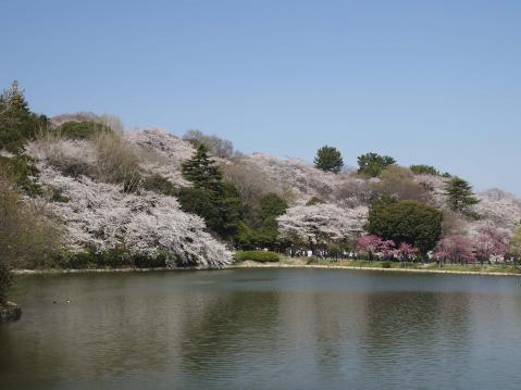 三池公園20120409_056