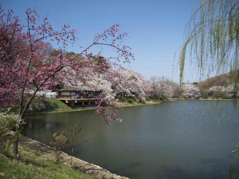 三池公園20120409_073