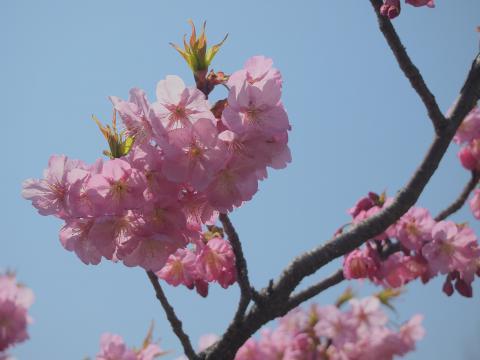 三池公園20120409_076