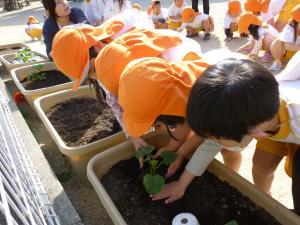 「夏野菜、植えました!!」