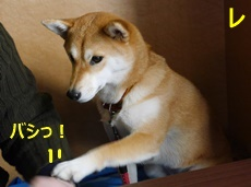 4オネダリ3