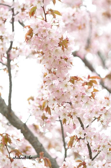 http://pub.ne.jp/himenoshippo/image/user/1371415504.