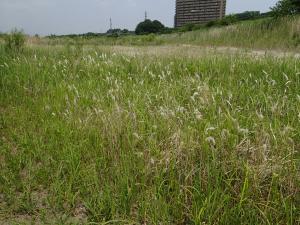 20130526shibakawa