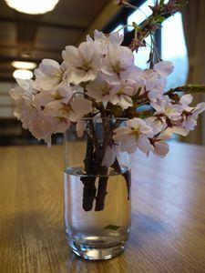 桜のサービス_R