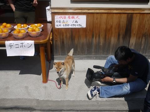 2代目看板犬_R