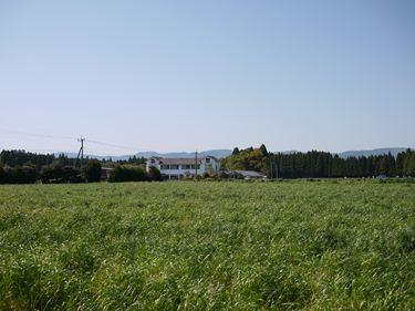 牧草畑_R