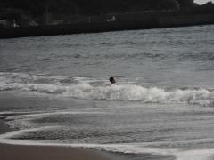 浜尻海岸 波遊び2