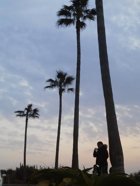 都井岬へ 朝の海2
